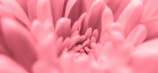 Абстрактный цветочный фон розовый цветок хризантемы макро цветы фон для праздника дизайн бренда