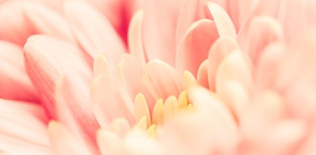 休日のブランドデザインのための抽象的な花の背景ピンク菊の花マクロ花の背景