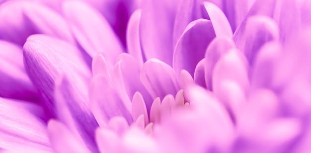 Абстрактный цветочный фон фиолетовый цветок хризантемы макро цветы фон для праздника бренда