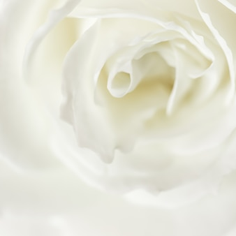 Abstract floral background white rose flower petals