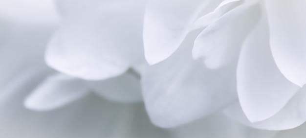 抽象的な花の背景白いテリージャスミン花びらマクロ花の背景休日
