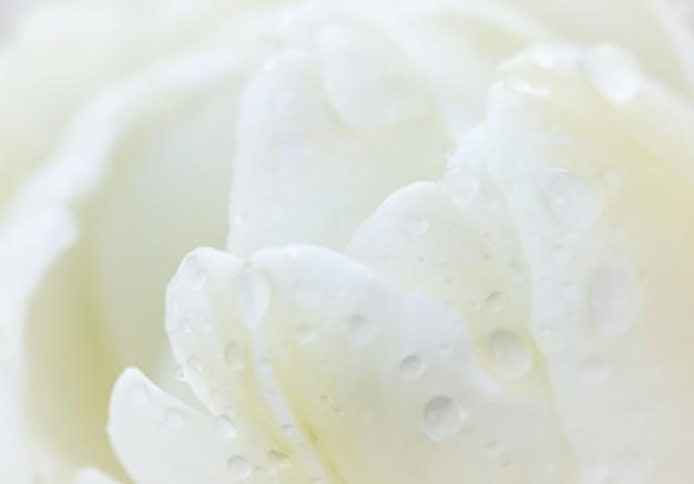 雨のマクロの花の背景の滴と抽象的な花の背景白いチューリップの花