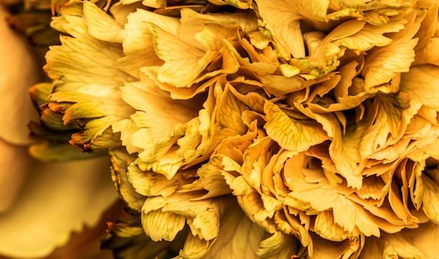 추상 꽃 배경 노란색 카네이션 꽃 꽃잎 매크로 꽃 배경