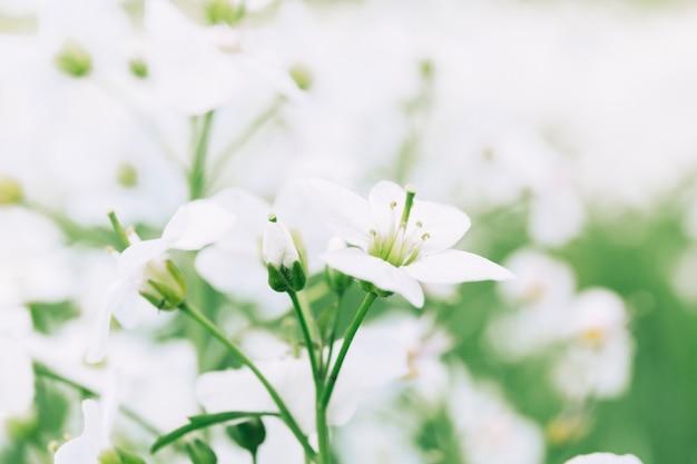 Абстрактный цветочный фон