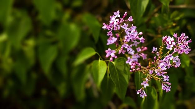 緑の葉と花の抽象的な花の境界線