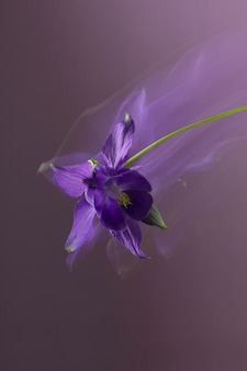 抽象的な花の写真の長いシャッタースピード紫の花びら紫の背景