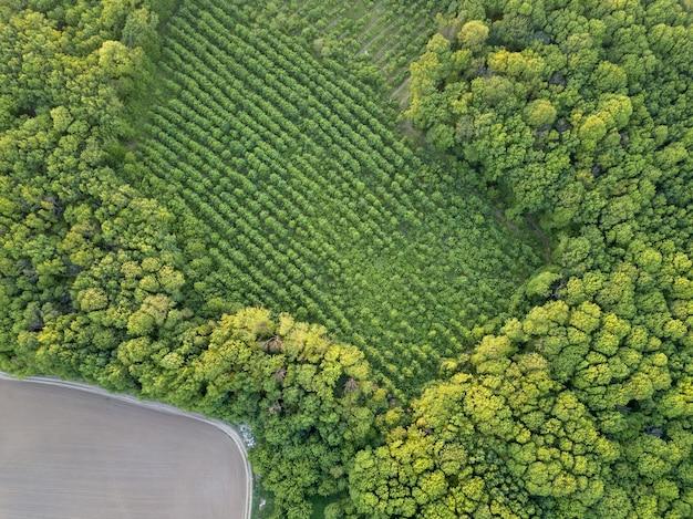 농업 분야의 추상적 인 기하학적 형태, 녹색과 검은 색의 묘목 어린 나무로 심은 작업 및 산림 지역을 심기 위해 준비되었습니다. 무인 항공기에서 공중보기.