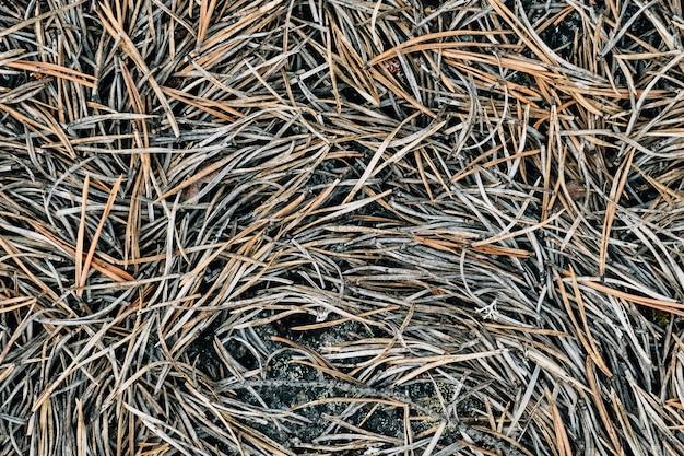 Абстрактный серый лесной фон. естественный органический узор