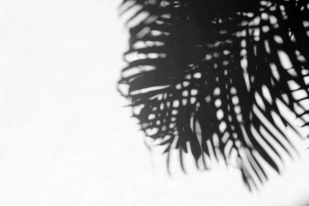 ヤシの葉の抽象的な灰色の影の背景、黒と白のモノクロトーン