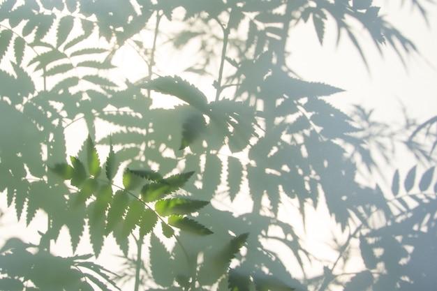 흰색 질감에 자연 잎의 추상 회색 그림자