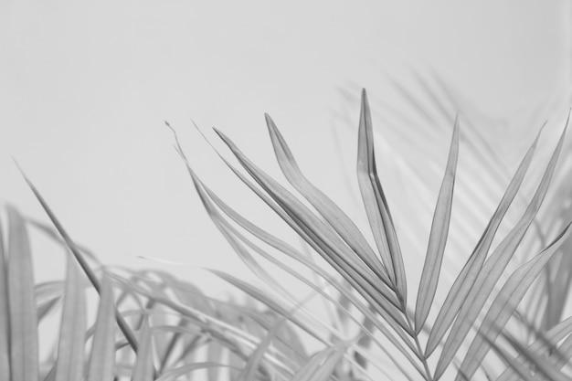 ヤシの葉、黒と白のモノクロトーンの抽象的な灰色の影