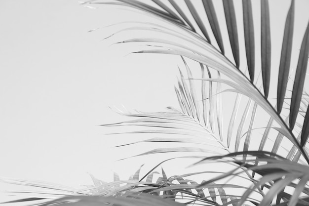 Abstract gray shadow of palm leaves, black and white monochrome tone