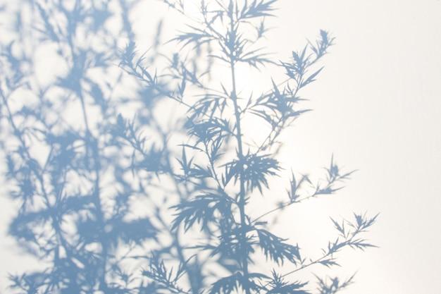 白の自然の葉の抽象的な灰色の影の壁