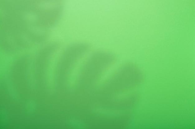 緑の抽象的な背景と熱帯のモンステラ植物の影。