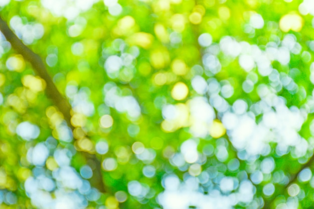 Abstract green bokeh from nature