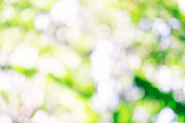 Abstract green bokeh of nature, blurred background