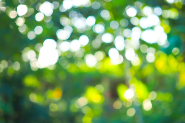 Abstract green bokeh out of focus background from tree in nature