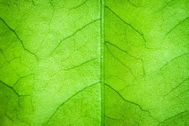 テクスチャの抽象的な緑の葉の背景
