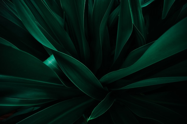 Abstract green leaf texture