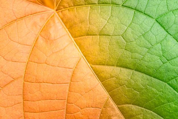 抽象的な緑の葉のツートンカラー