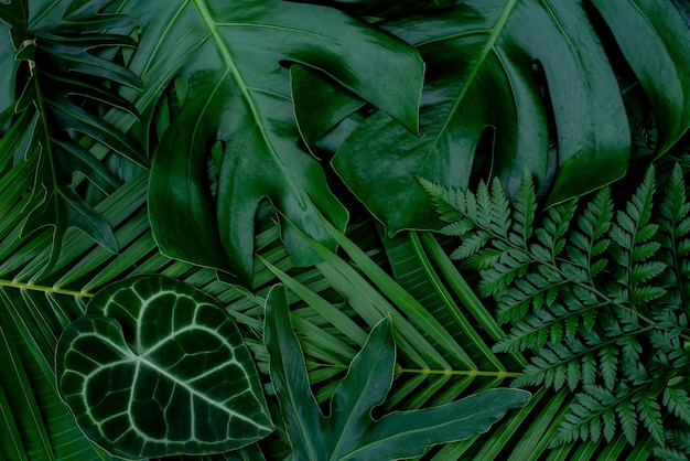 Abstract green leaves nature texture background creative layout for design