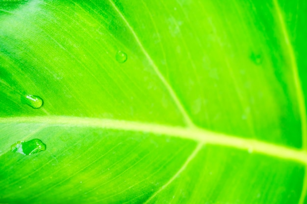 Abstract of green leaves and water droplets, fresh.