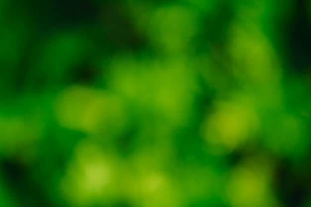 Abstract green nature
