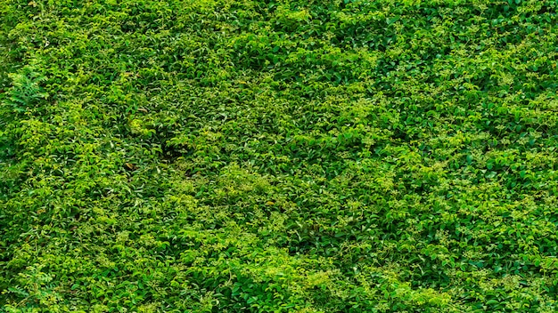 Abstract green plant texture background