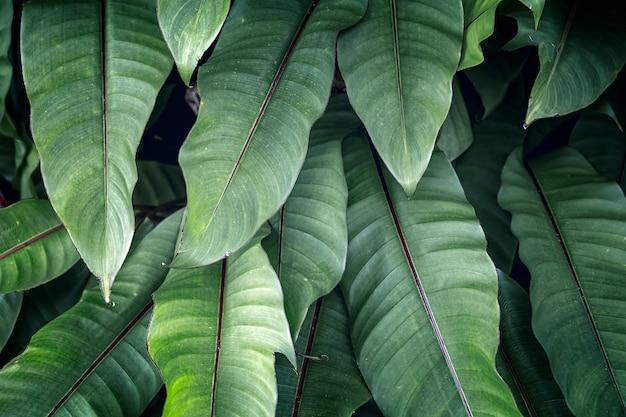 추상 녹색 열 대 잎의 질감, 자연 어두운 톤 배경, 열 대 잎