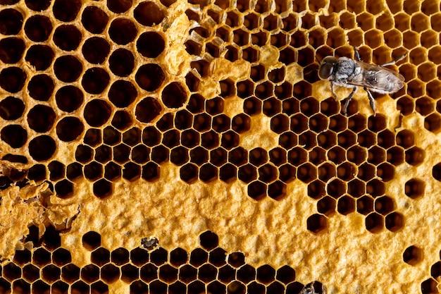 Абстрактные соты с фоном текстуры пчелы