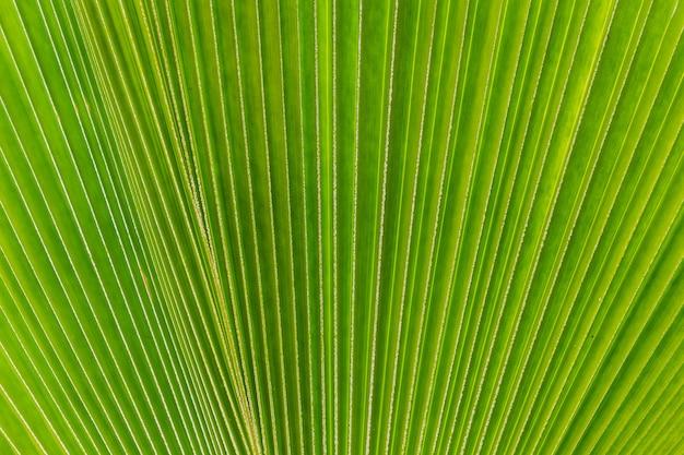 緑のヤシの木の葉の背景としての抽象的なイメージ