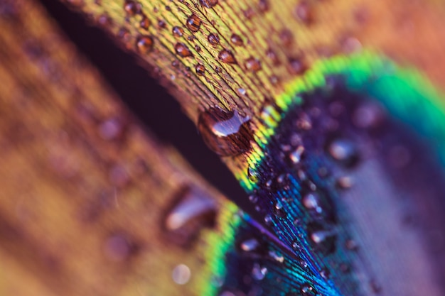 An abstract image of a peacock feather with a water drop