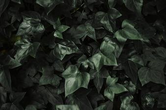 抽象的なアイビーの葉の背景