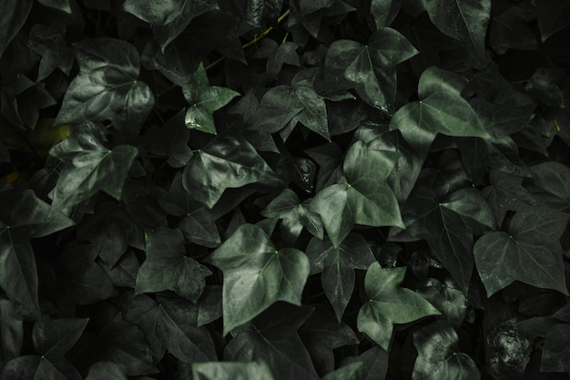 Abstract ivy leaves background