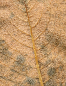 Abstract leaf veins. brown autumn leave close up. space for lettering