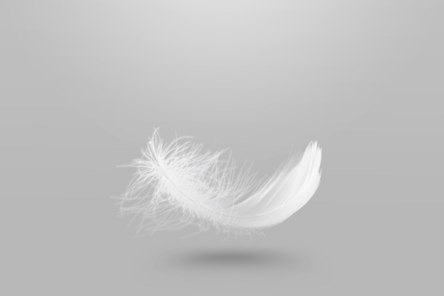 Abstract lightly white fluffy feather falling in the air