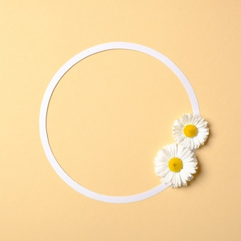 Abstract minimal composition. round frame border with daisy flowers on pastel yellow background.