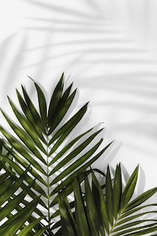 추상 최소한의 개념 나뭇잎과 그림자