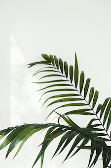 Abstract minimal concept plant and shadows