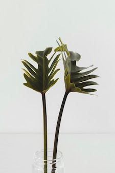 Primo piano minimo astratto della pianta