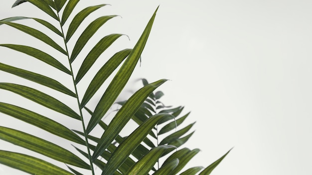 Abstract minimal plant indoors leaves copy space