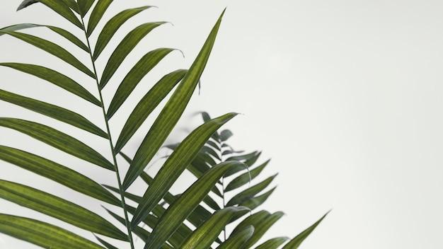 Абстрактное минимальное растение в помещении оставляет копию пространства