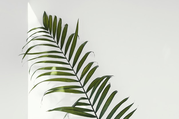 Abstract minimal plant indoors leaves