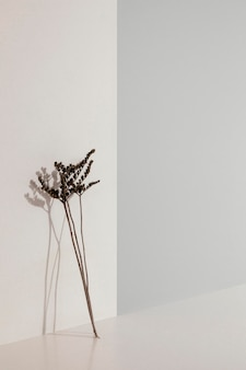 Abstract minimal plant leaning on a wall copy space Free Photo