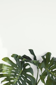 Abstract minimal plant monstera leaves