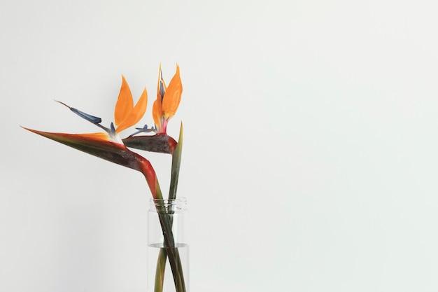 Abstract minimal plant and orange flowers Premium Photo