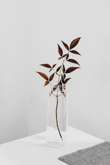 Abstract minimal plant in a tall glass