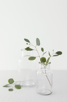Abstract minimal plant in transparent vases