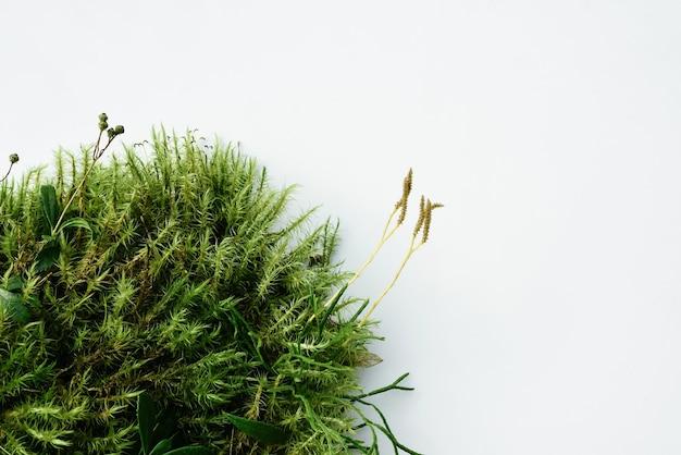 抽象的な自然の背景、森の苔からの自然化粧品の表彰台