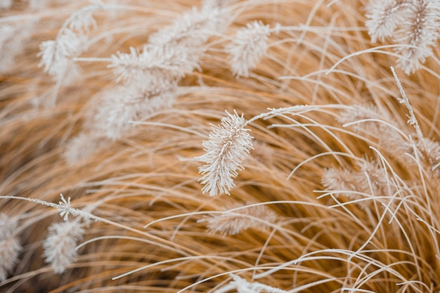 Abstract natural background of soft plants. frosted pampas grass and flowers on a blurry bokeh, boho style. patterns on the first ice. earth watching